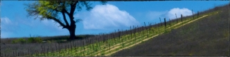 lone-oak-banner-winery_0225.jpg